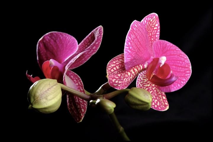 Orchidées... la famille