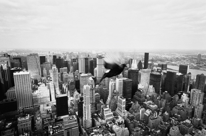 New York - Libre -