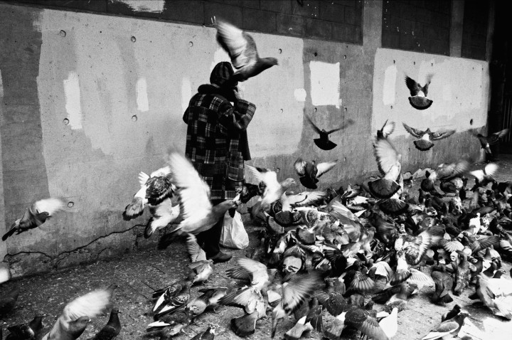 New York - Pigeons street -