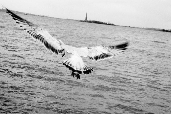 New York - Envol vers la liberté -