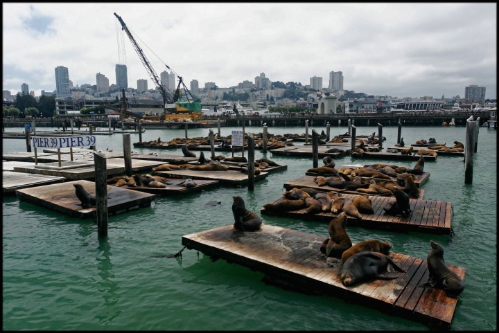 San Francisco, Pier 39, Californie, États-Unis