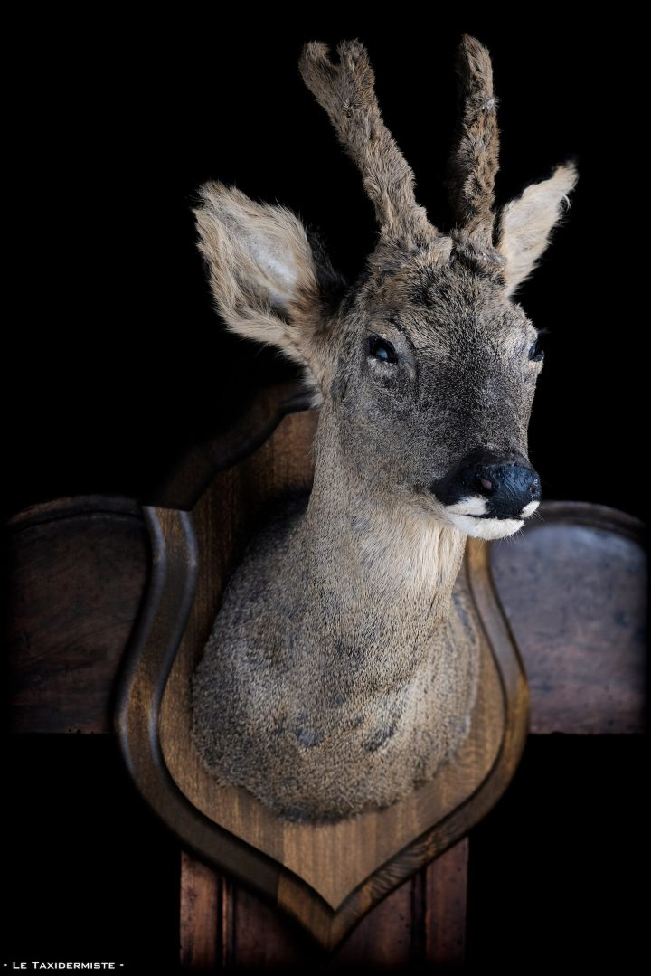 - Le taxidermiste -